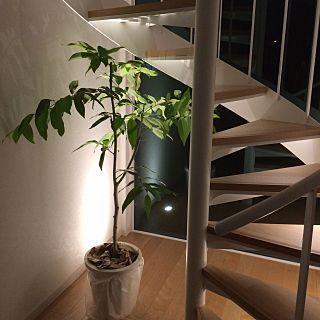 観葉植物のおしゃれな飾り方 センスいい2