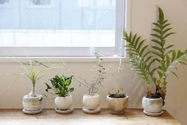 観葉植物 おしゃれ 室内 名古屋