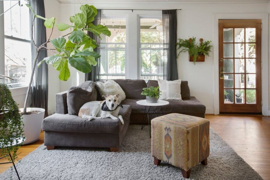 観賞植物のおしゃれな飾り方実例集 モダンインテリア